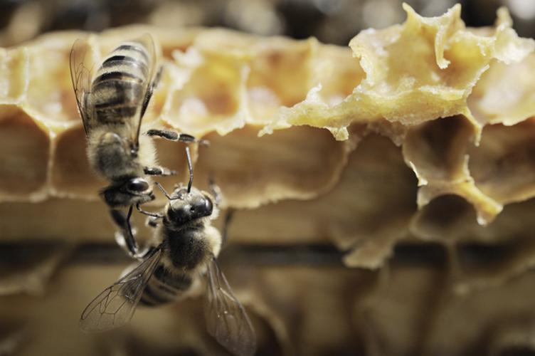 photographe professionnel lyon, marie bienaime photographe independant, reportage, photo metier, corporate, abeilles