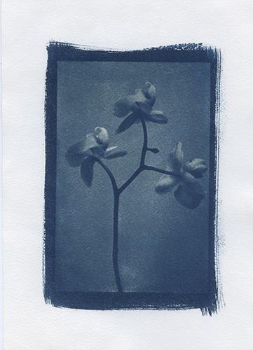 photographe lyon, marie bienaime artiste photographe, photographie d'art, exposition, cyanotype, procédés anciens, monochrome