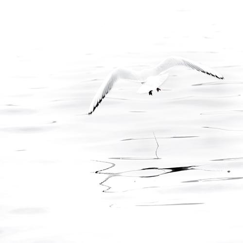 marie bienaime artiste photographe, oiseaux, parc de la tete d or, nir et blanc, photo n&b, tirage art, exposition, fine art, lyon