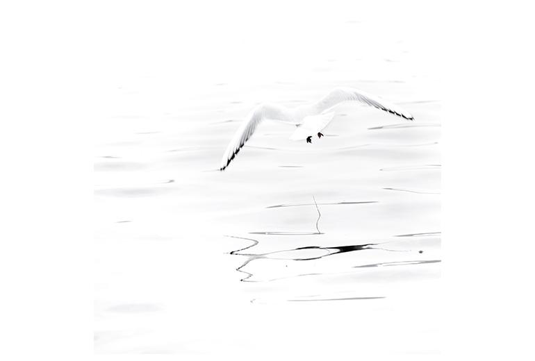 artiste photographe, photographie d'art, exposition, serie photographique, artistique, poesie, oiseaux, envol, marie bienaime, photographe lyon, photographe professionnel, photographe professionnel lyon
